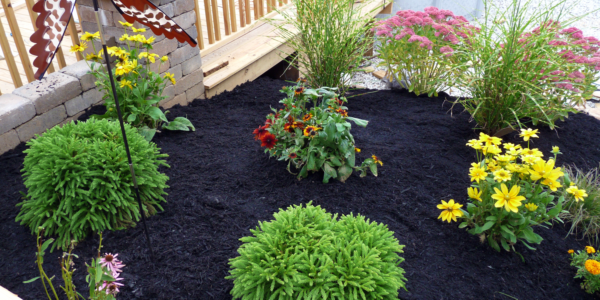 Black Rubber Buffings Will Not Fade Like Painted Wood Mulch Longlasting Rubbermulch Garden Plants Roosterrubber