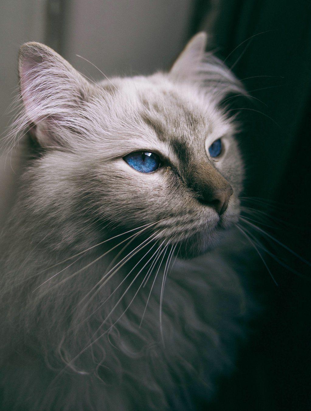 White Cat Creature Meme
