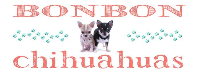Houston Texas Chihuahua Breeder Chihuahua puppies
