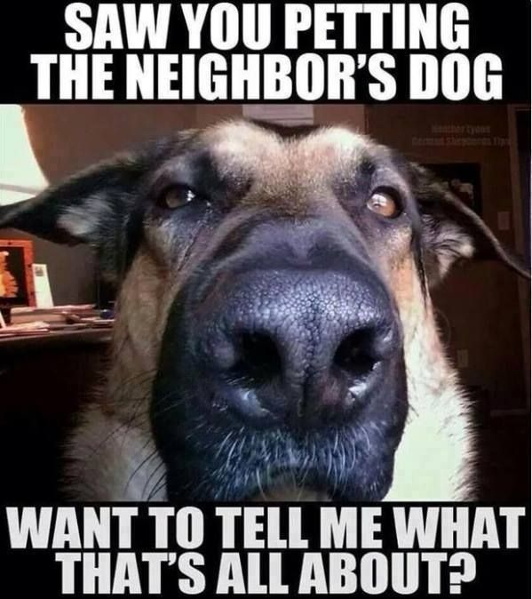 Willow Creek Vet On Twitter Funny Animal Jokes Funny Animal Quotes Funny Dog Pictures