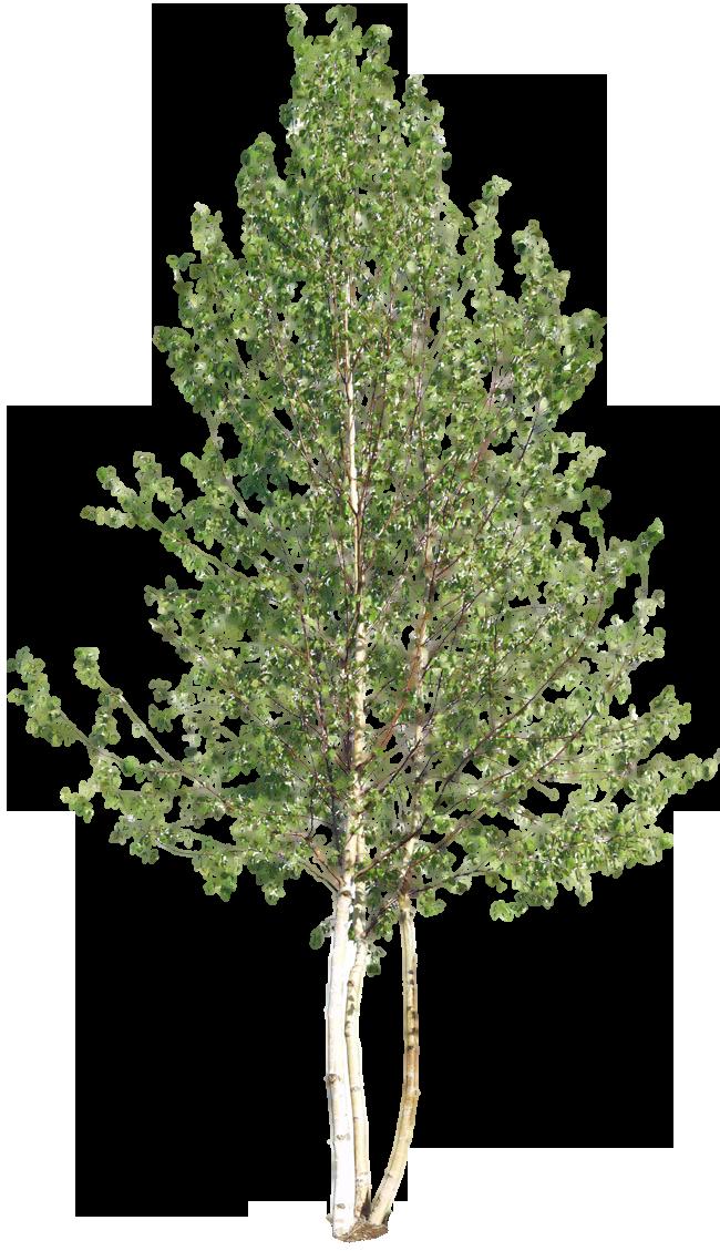 Www Charlie Bruzzese Com Wordpress Wp Content Uploads 2016 05 Deciduous 18 Png Tree Photoshop Landscape Architecture Graphics Garden Illustration