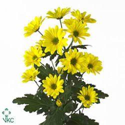 Pin En Chrysanthemum Spray