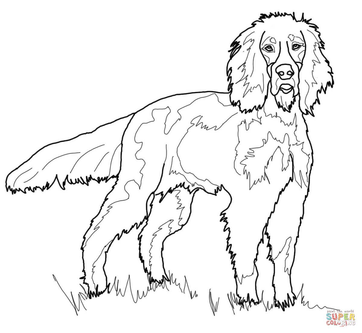 Gordon Setter Super Coloring Dog Coloring Page Gordon Setter