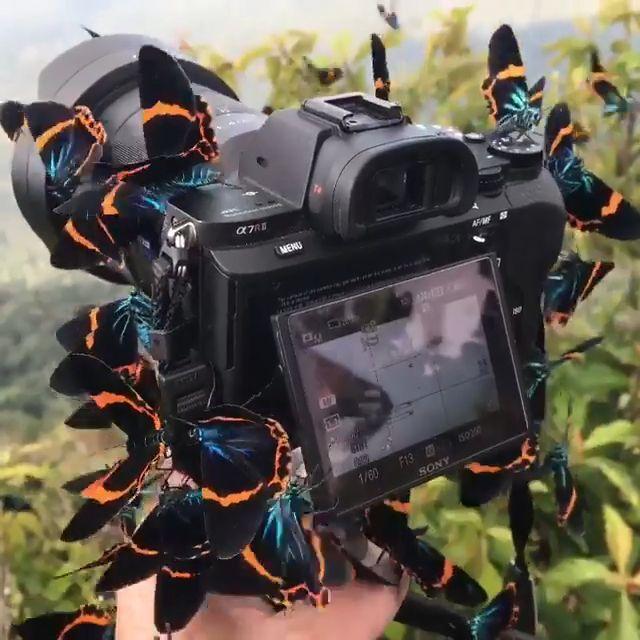 Beautiful Butterflies - #Beautiful #Butterflies #watches