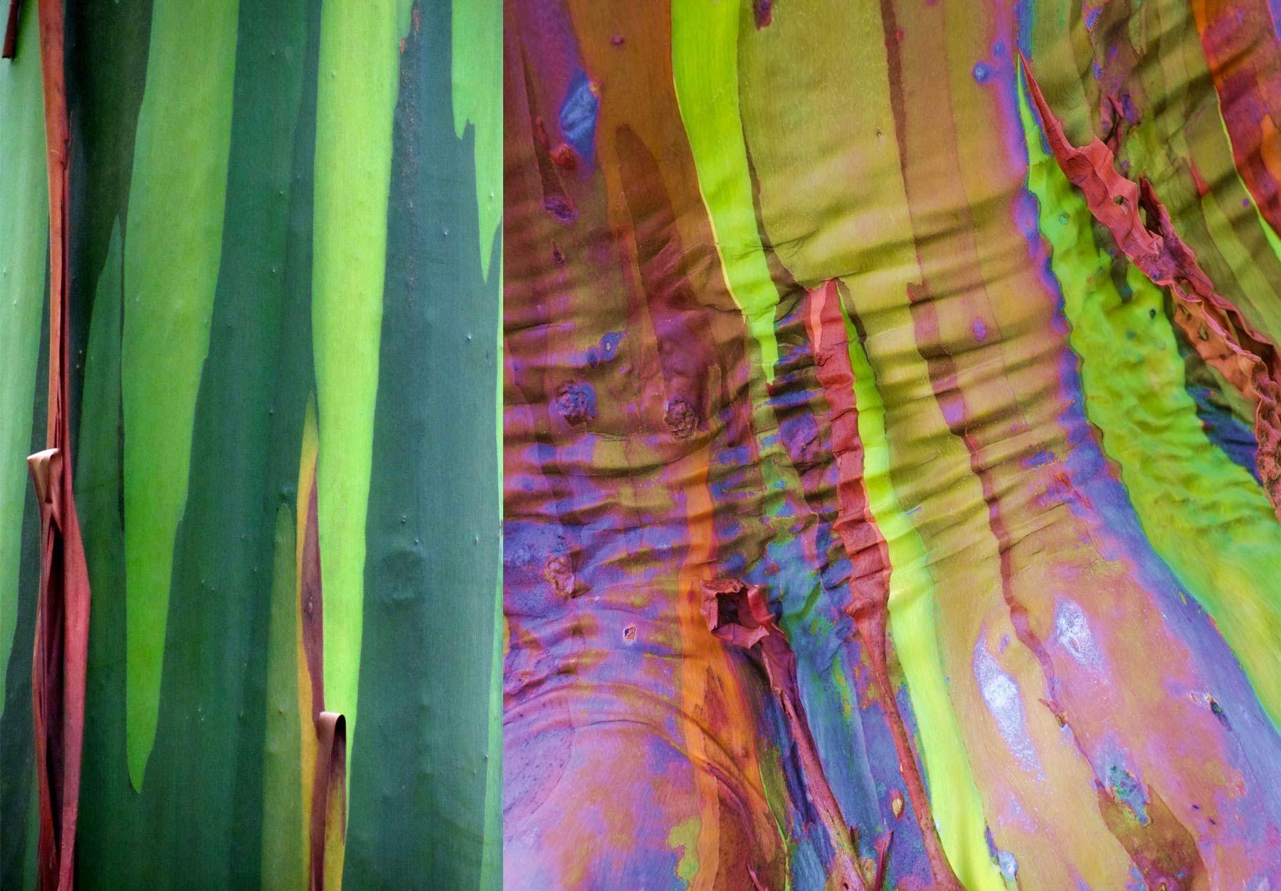 série de photos d\'un arbre recouvert de couleurs naturelles ...