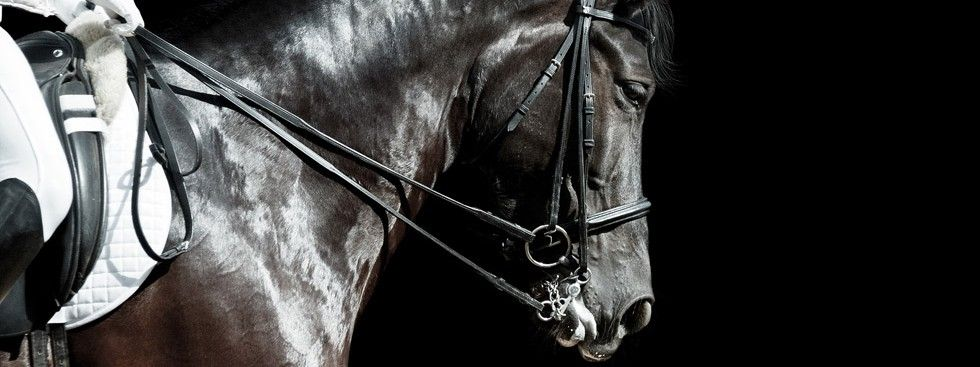 Why not treat yourself to the ultimate equestrian experience?
