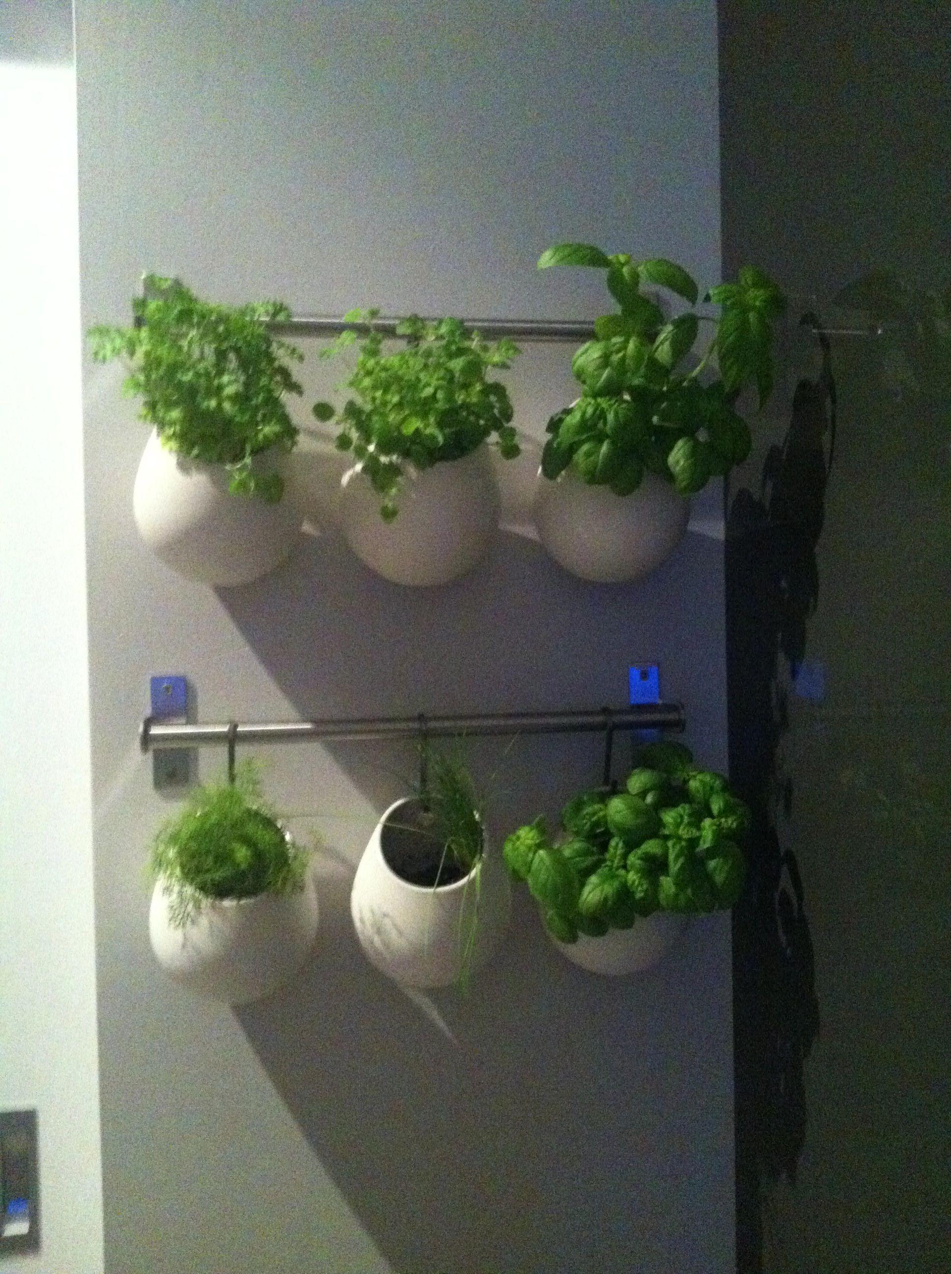 My vertical indoor herb garden. Vertical herb garden