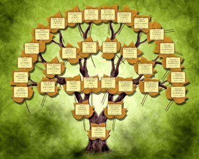 Dise o personalizado del rbol familiar arbol - Diseno arbol genealogico ...
