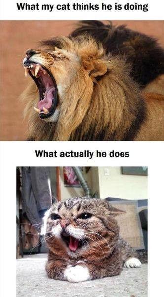 24 lustige Katzen und Kätzchen Bilder - Tiere Blog #funnykittens