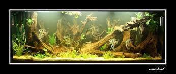 Resultado de imagem para pictures of south american aquariums