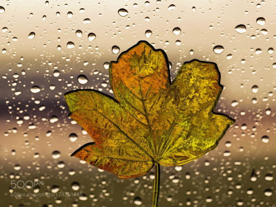 Leaf stuck in the rain on the window .... #fineart #sebastiangreenwood