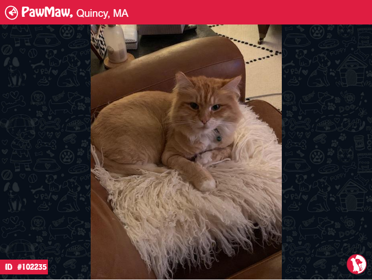 Help Ginger Is Lost Lost Cat Losing A Dog Losing A Pet