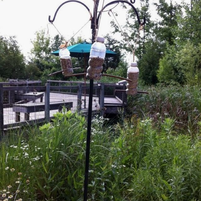 how to get birds to come to your feeder