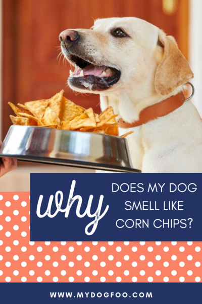 Why Does My Dog Smell Like Corn Chips? Dog smells, Corn