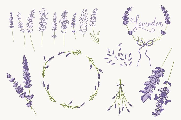 Lavender Drawing Black And White Google Search Couronne Dessin