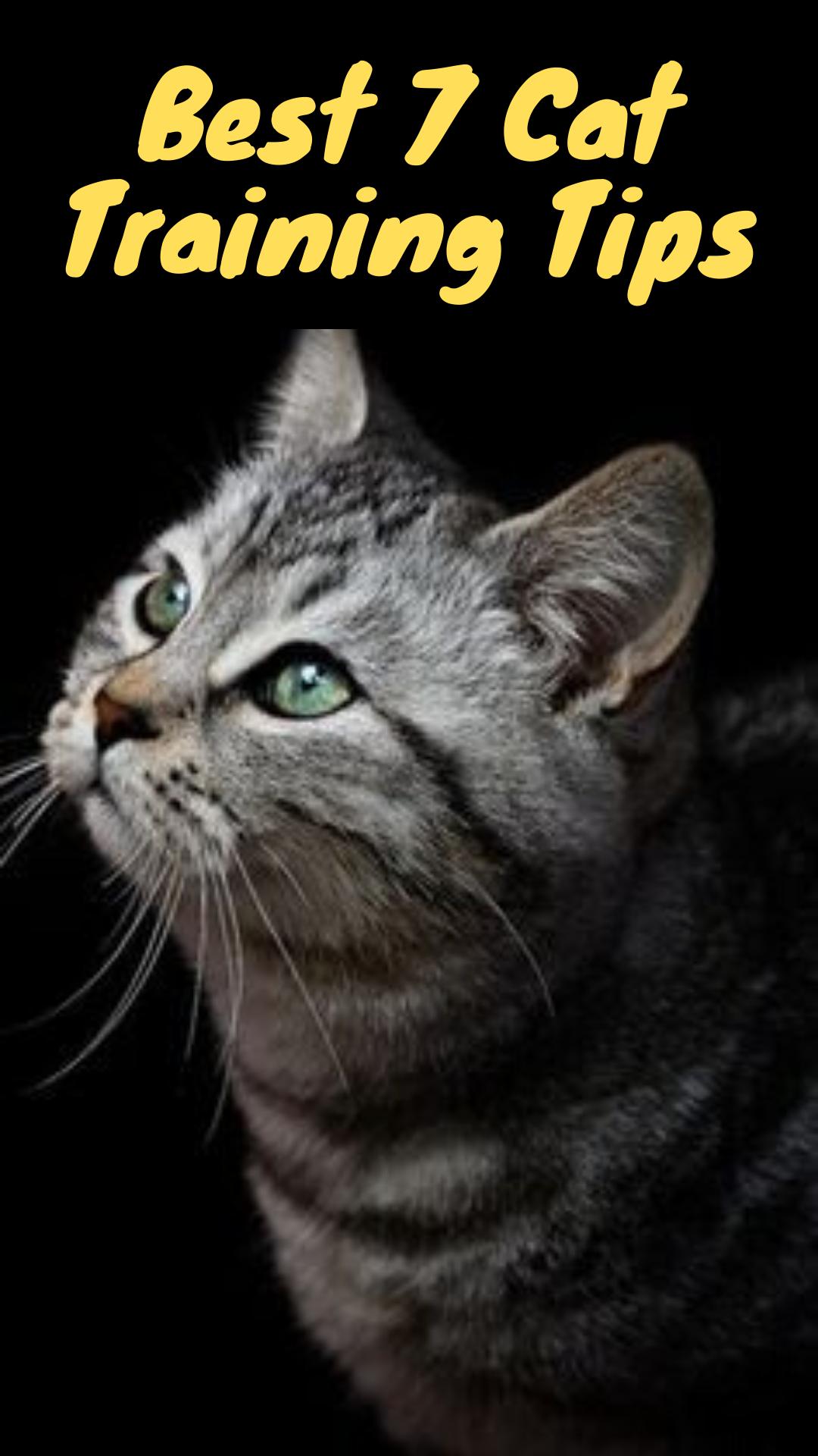 Best 7 Cat Training Tips In 2020 Cats Cat Training Funny Cat Memes