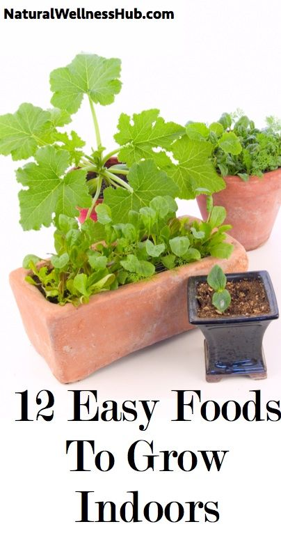 12 Easy Foods To Grow Indoors – Growing Indoors Plants 400 x 300