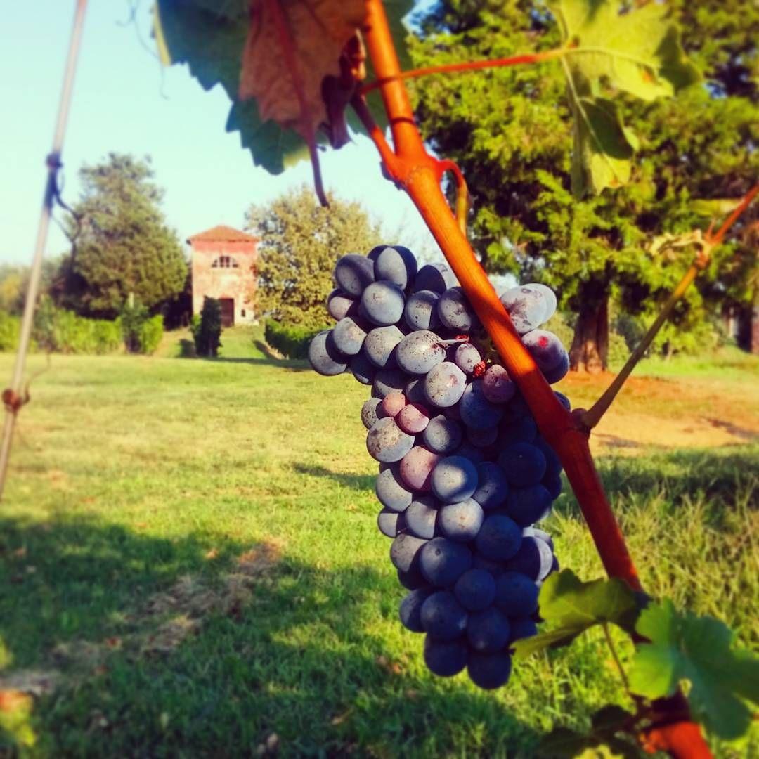 """#rocchettatanaro #rocchetta #rocchettanelcuore #igers #igersasti #uva #vino #Wine #wineyard #grape #Settembre #september #Santemiliano #Chiesa #church"""