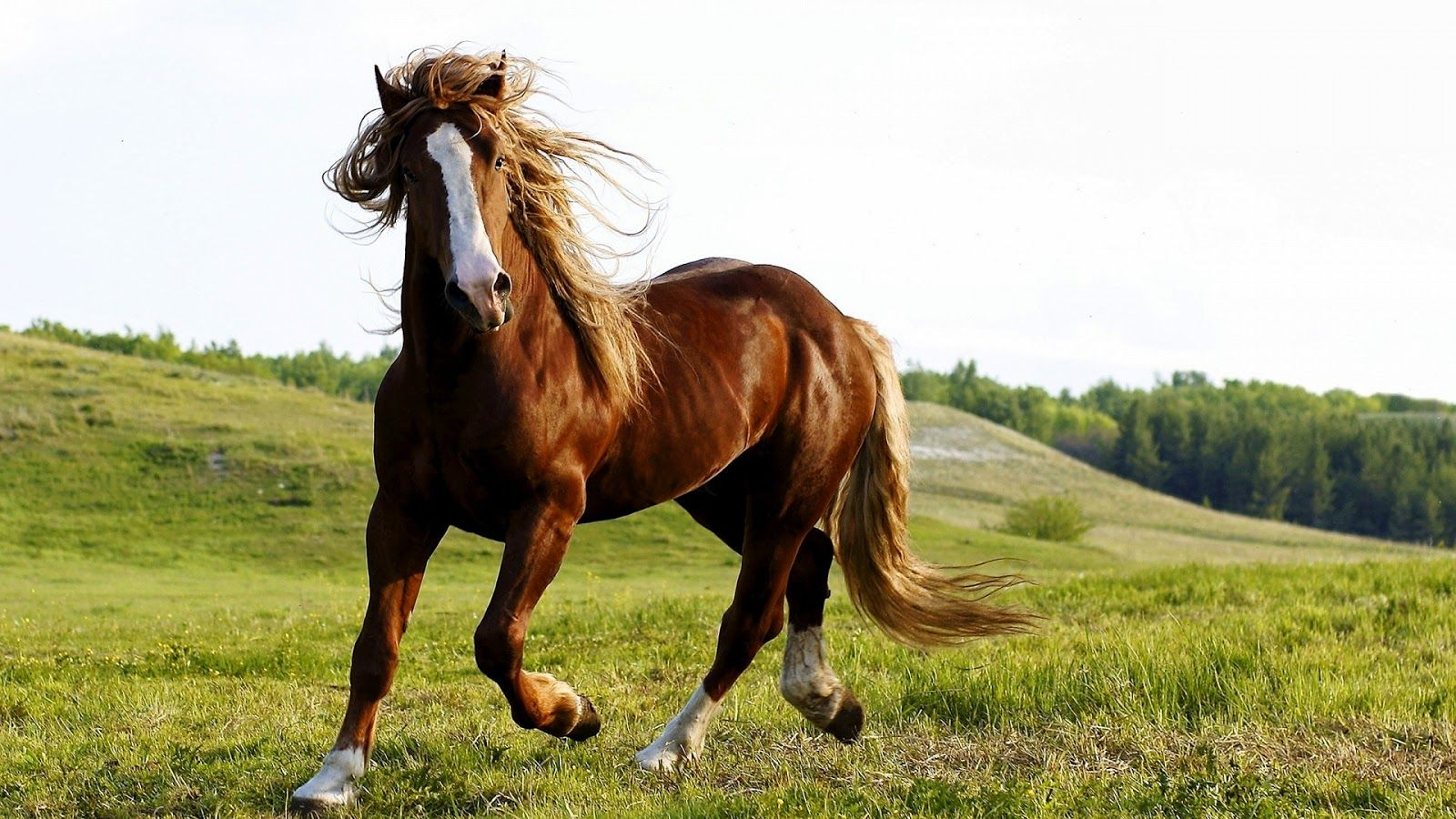 Fantastic Wallpaper Horse High Definition - f93dad440105784243b6035058fc011e  HD_693249.jpg
