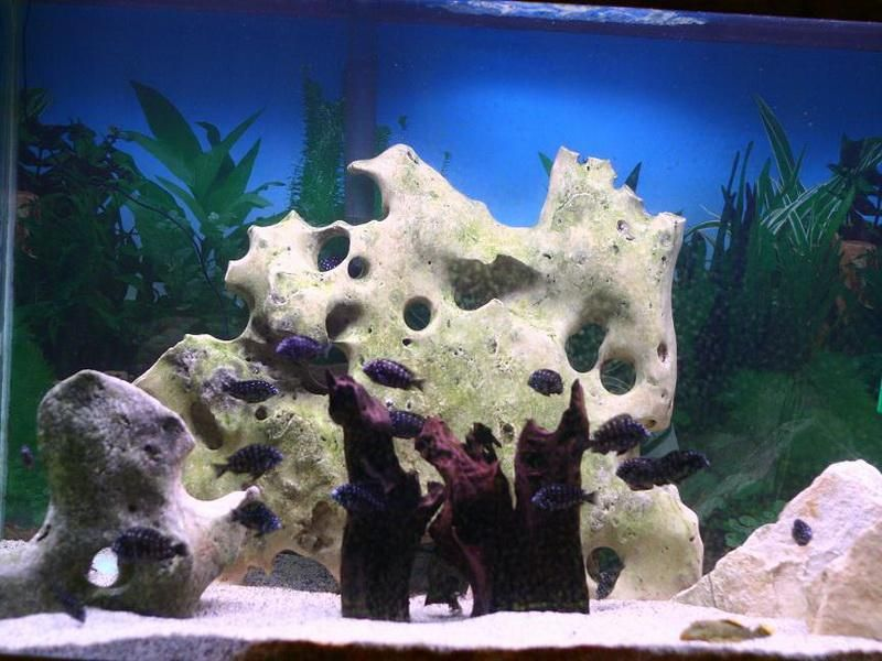 Fish Tank Coral Decoration Ideas