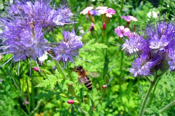 Полевые цветы - естественная красота и гармония (фото ...
