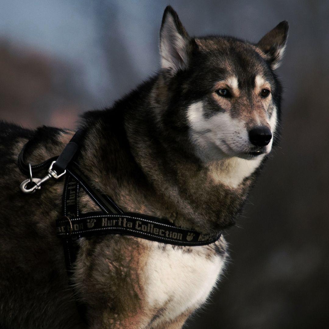 Wolf Lovers (wolfloversworld) • Photos et vidéos