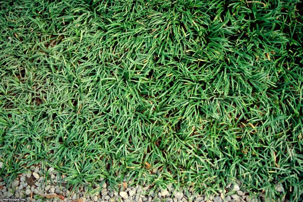 1000+ Ideas About Types Of Lawn Grass On Pinterest | Lawn Grass