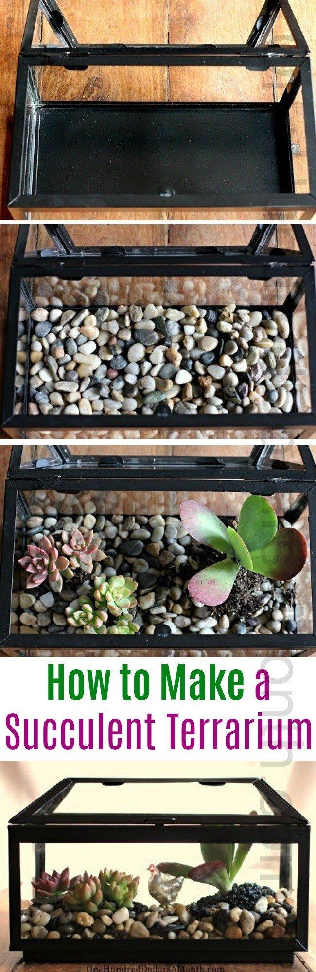 How to Make a Succulent Terrarium #succulentterrarium