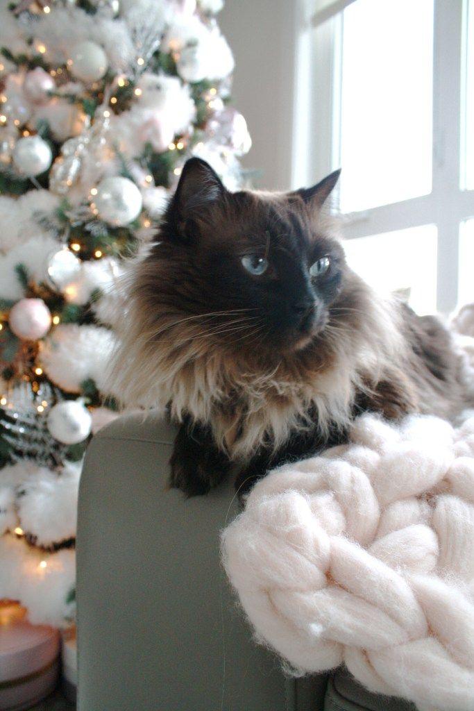 Glam Christmas home decor - cat and Christmas tree - Chandeliers and - christmas home decor