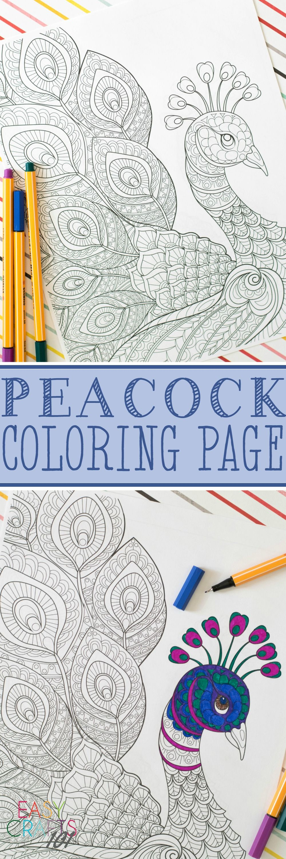 free coloring page peacock coloring peacocks and