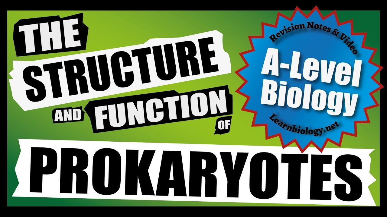 A Level Biology NEW Prokaryote Structure and function A