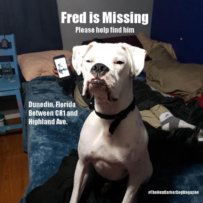Update As You Can See From The Posts Below Fred Is Home