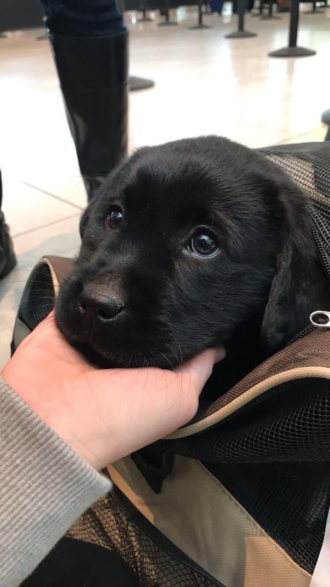16 bezaubernde Welpen, die Dinge zum ersten Mal erleben #cutepuppies