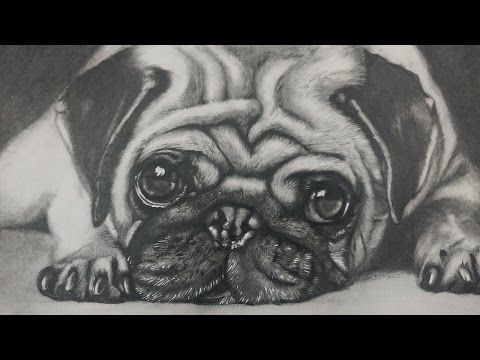 how to draw a pug dog face step by step youtube