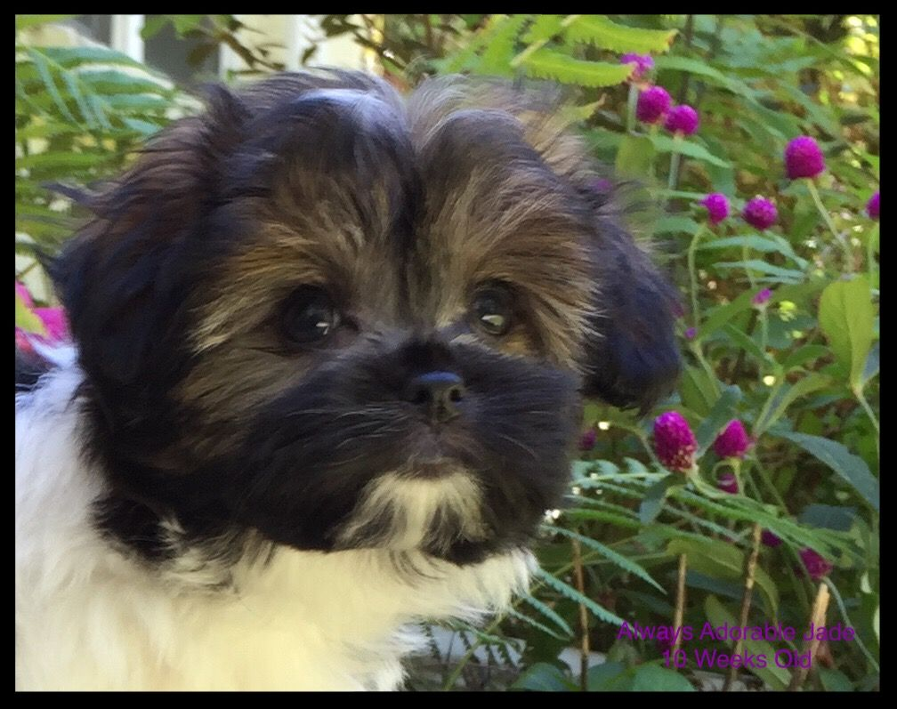 Pin by Angela on Sweet Baby Jade Animals, Dogs