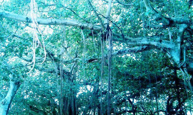 Merrie Christmas Park, Coral Gables, FL