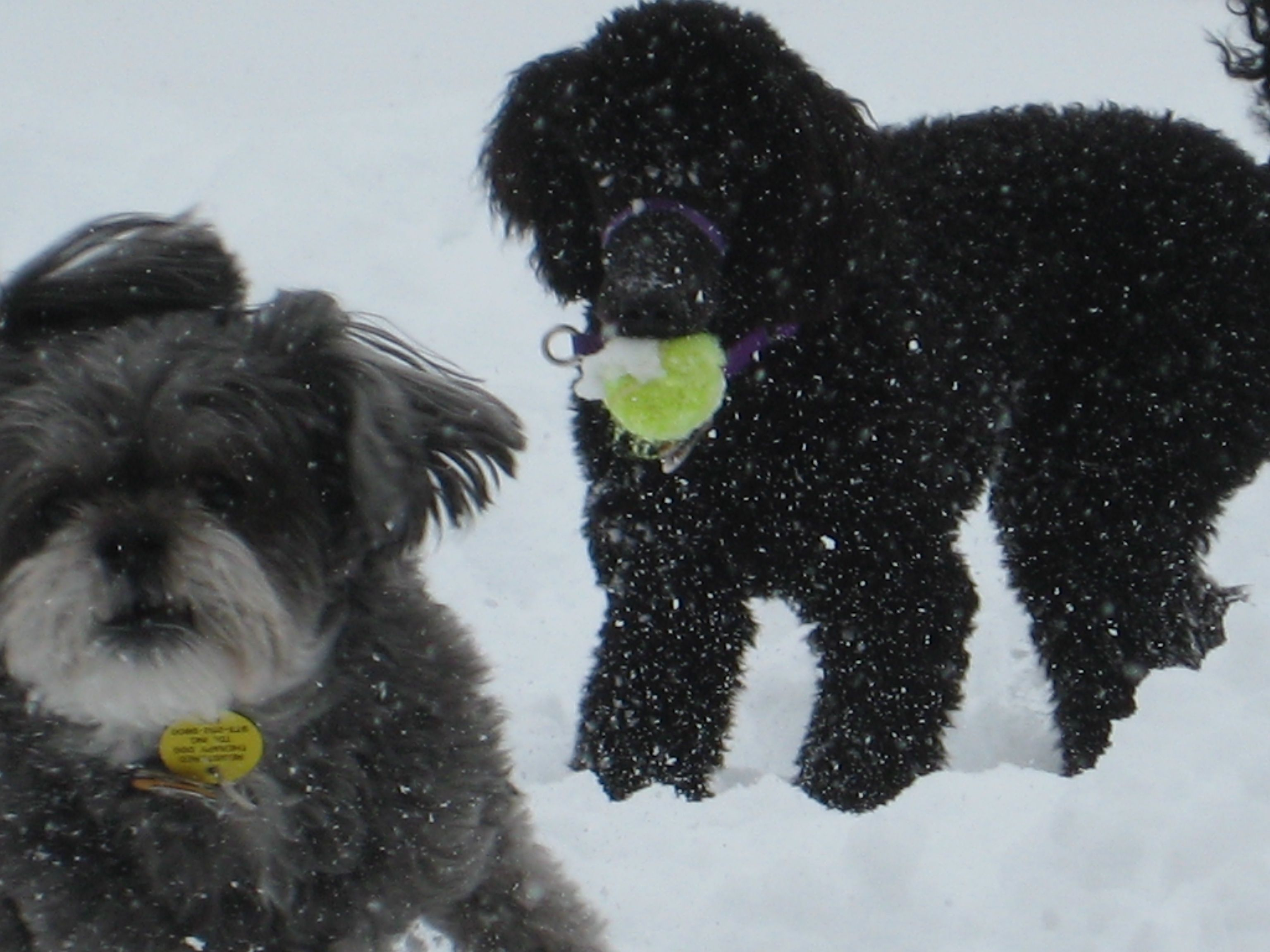 Mikey and Bodhi playing in the snow!
