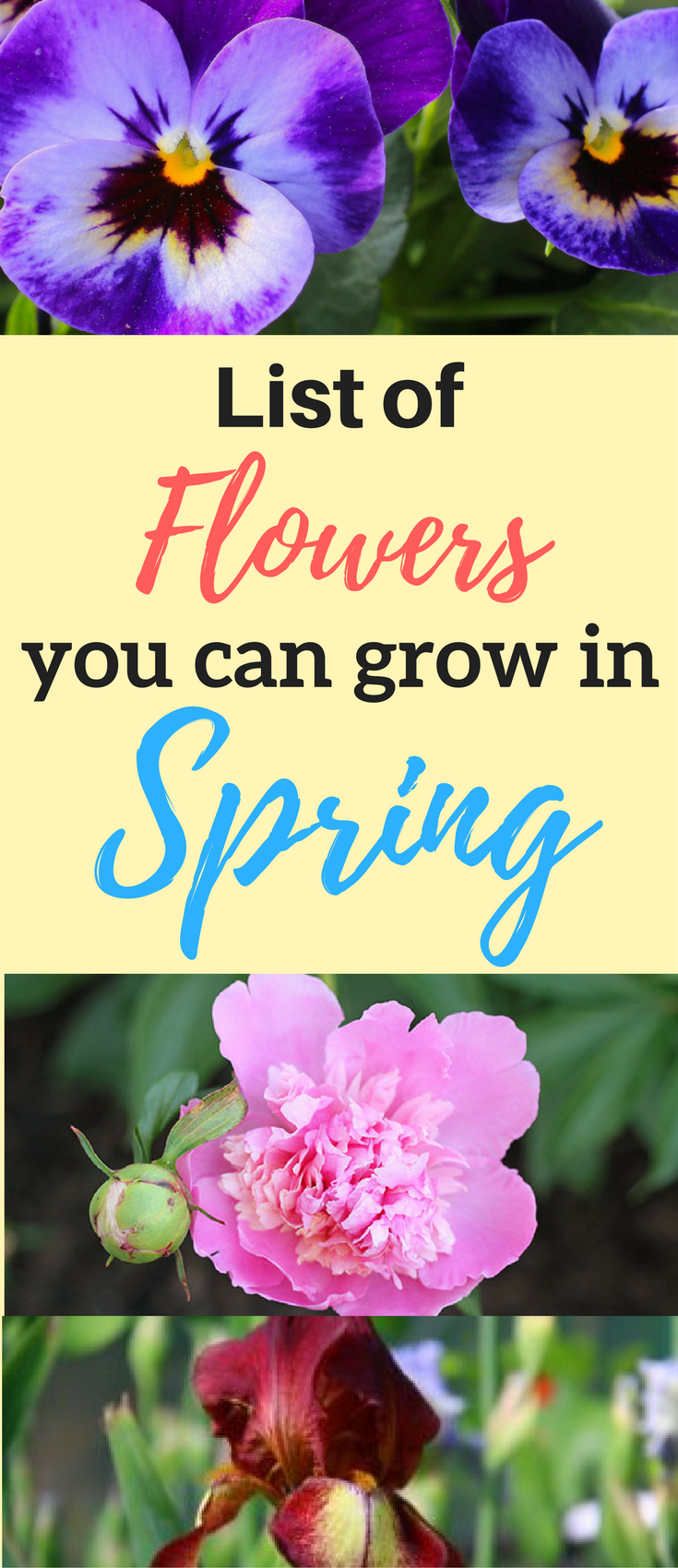 List Of Flowers To Grow In Spring Bruces Roundup Pinterest