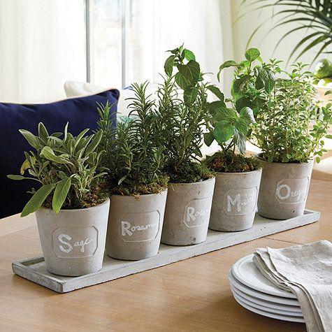 Veda Herb Pots Set Of 5 Container Herb Garden Herb Garden
