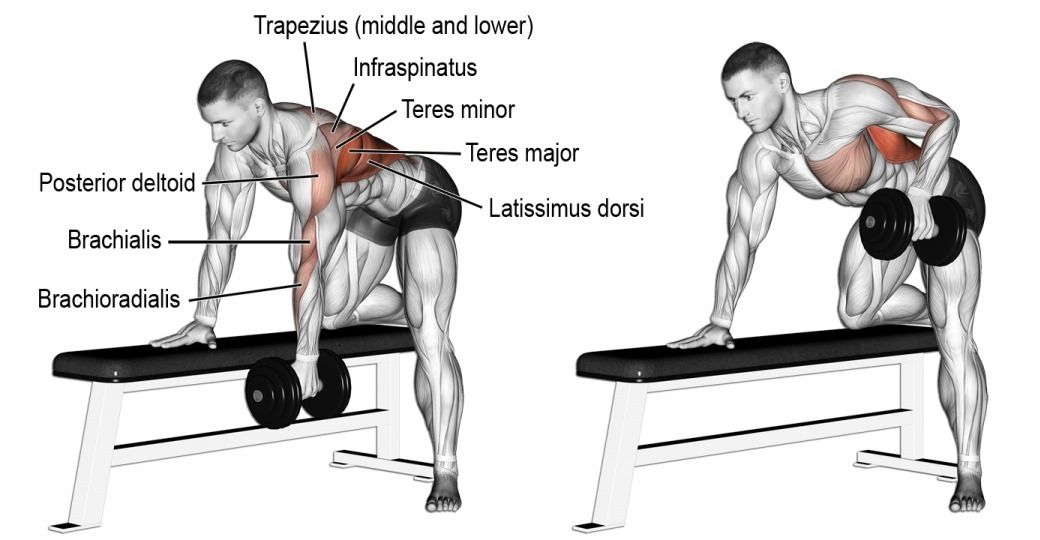 5 Reasons You Need to One-Arm Dumbbell Row | Musculation ...