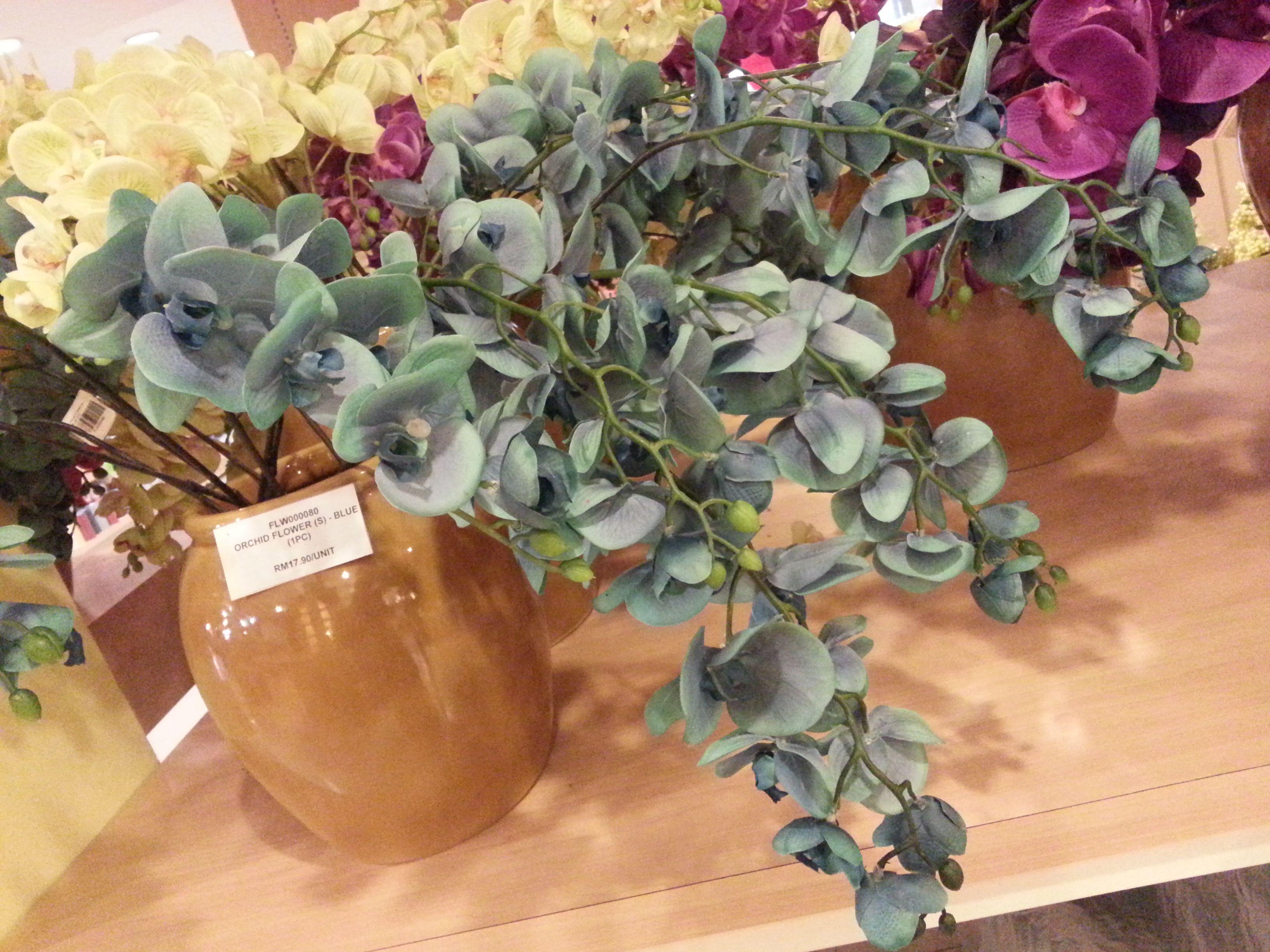 orkid biru ni ok x?