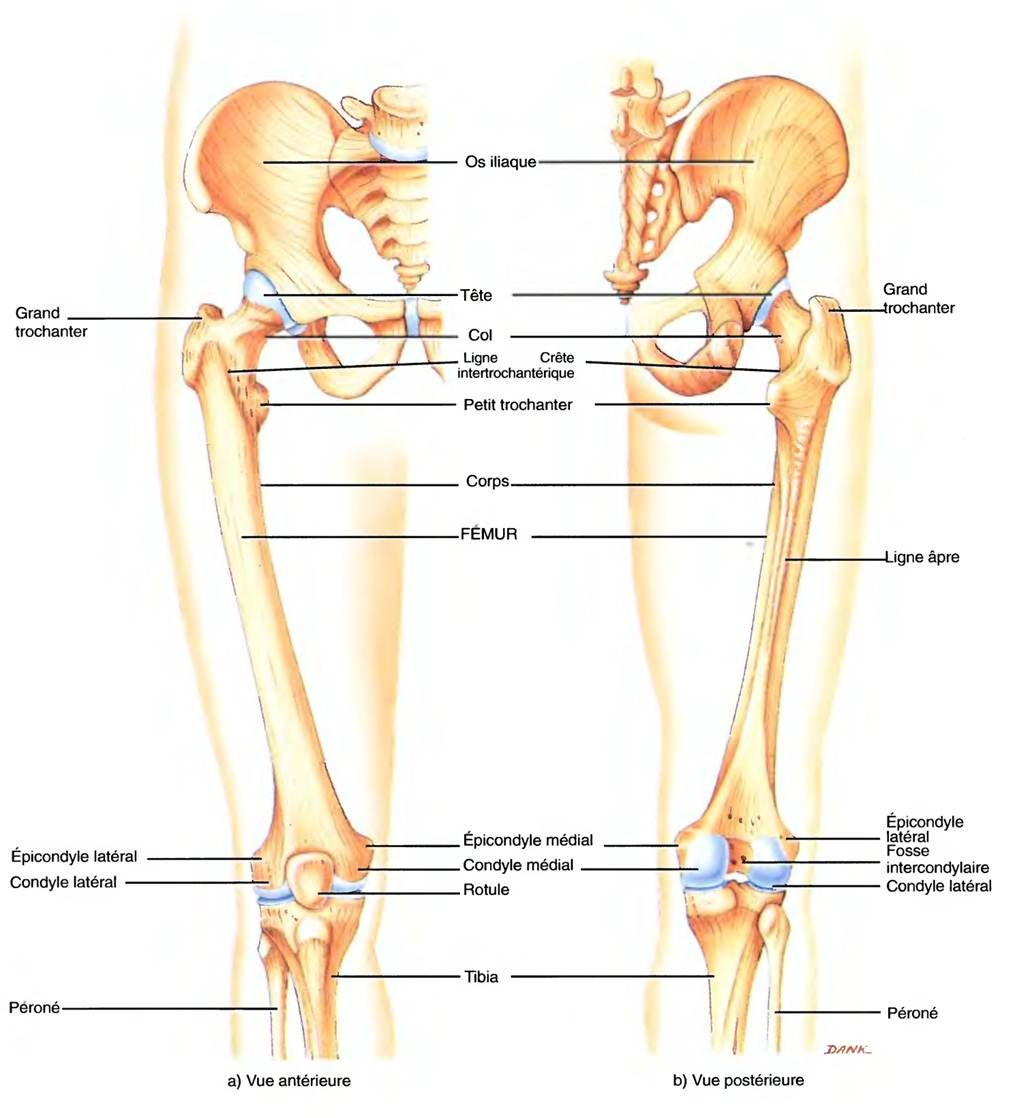 Fantastisch Anatomie Des Unterleibs Bilder - Anatomie Ideen ...
