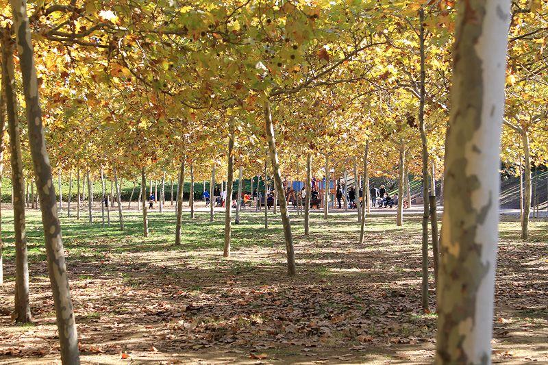 Parques Para Disfrutar En Familia En Barcelona Viajares Parques Barcelona Parque Urbano