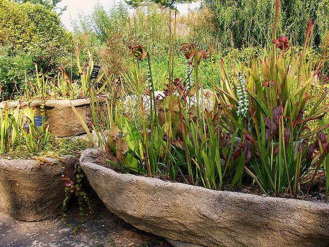 Spiranthes And Sarracenia Bog Garden Water Features In The