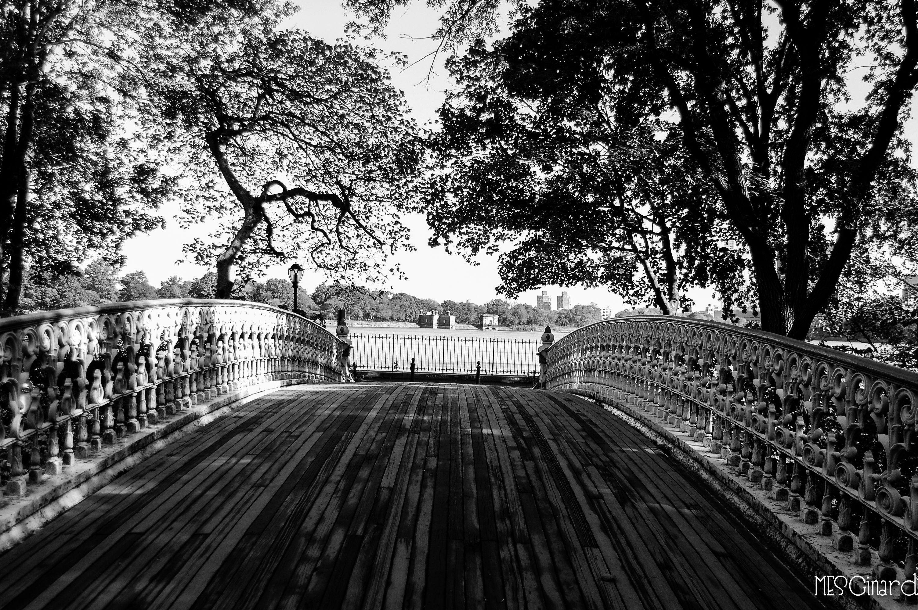 Puente soñador