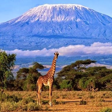 the volcano and the jiraffe