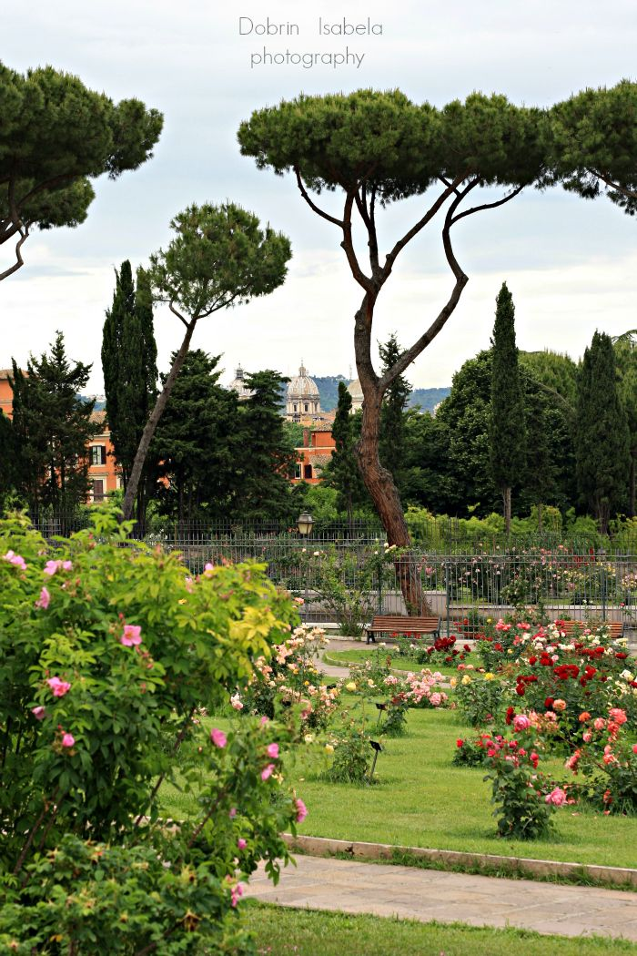 Roses In Garden: Municipal Rose Garden, Aventine Hill