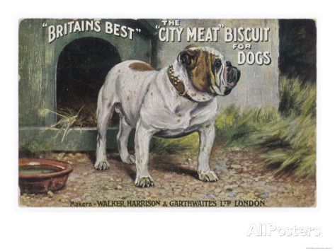 Bulldog Stands Outside His Kennel In An Advertisement For City