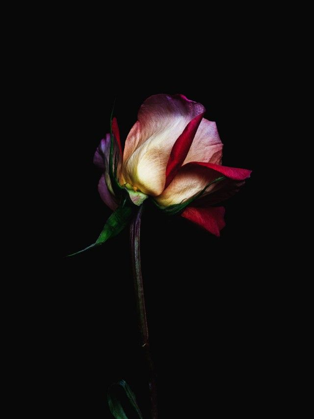 Decaying Roses by Billy Kidd