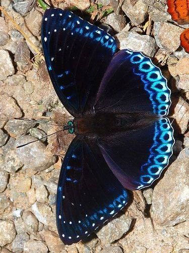 120+ Beautiful Butterflies // Amazing Blue butterfly, Red butterfly, Yellow butterfly #butterflies